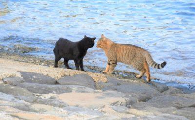 【猫島を日帰り観光】小倉からフェリーで離島へ!藍島・馬島